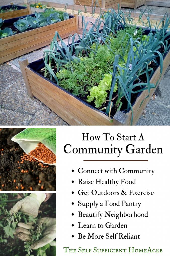 How to Start a Community Garden | Garden pests, Growing ...