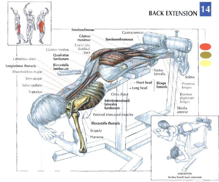 Back Extension Illustration Sport Complexe