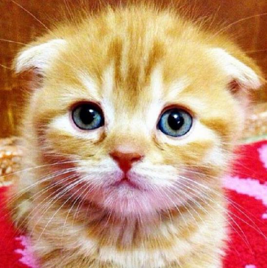 40 Koleksi Gambar Gambar Anak Kucing Yang Terlajak Comel Azlan Rumadi Pretty Cats Kittens Cutest Kittens Cutest Baby