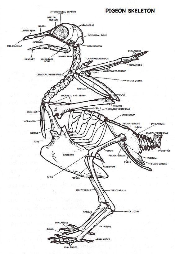 drawing body diagram