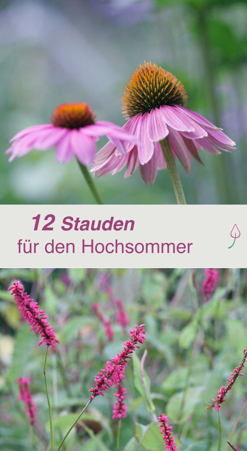 Lieblings Die 12 schönsten Sommerblumen | разное | Sommerblumen, Stauden und &JS_62