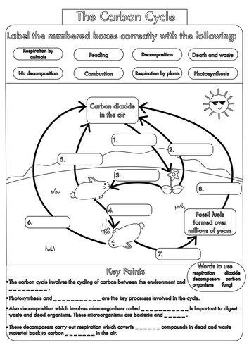 GCSE Carbon Cycle worksheets and A3 wall posters | Worksheets ...