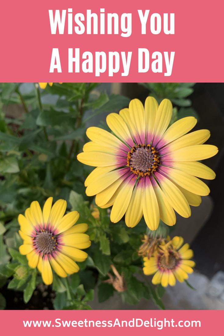 You happy wishing day a Happy Chocolate
