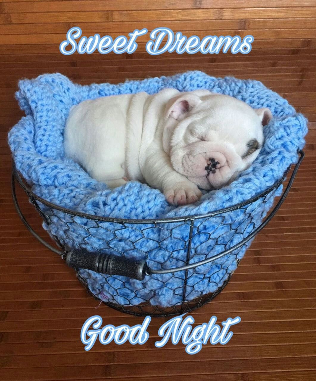 Good Night Sweet Dreams My Friend And Rest Well May God Bless You Cute Animals Funny Animal Videos English Bulldog Puppies