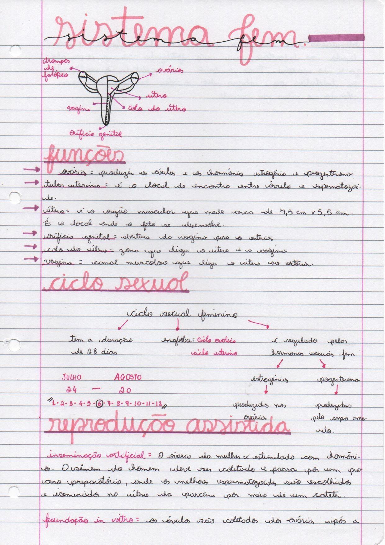 Biologia Sistema Reprodutor Feminino Aparelho Reprodutor