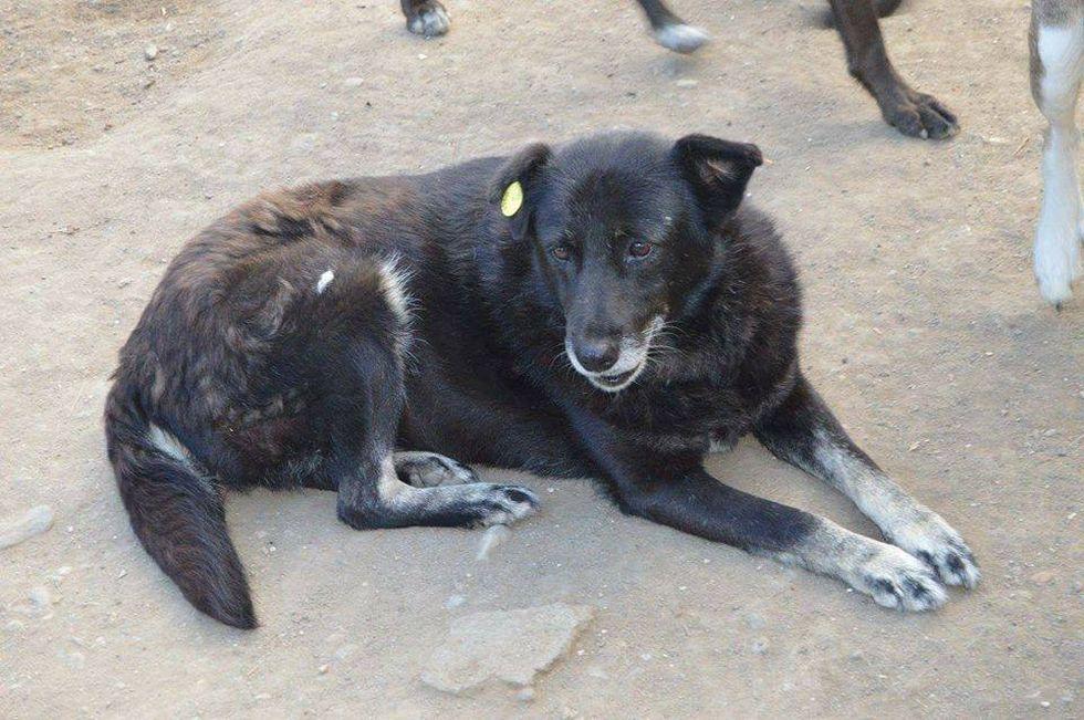 Tierschutz Zu Hause Fur Alte Hunde Strassenhunde Aus Rumanien Gesucht Alter Hund Tiere Tierschutz