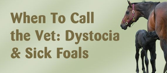 When To Call the Vet: Dystocia & Sick Foals