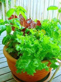 Fast Growing Vegetables For Tabletop Gardens Growing Vegetables Indoor Vegetable Gardening Growing Plants
