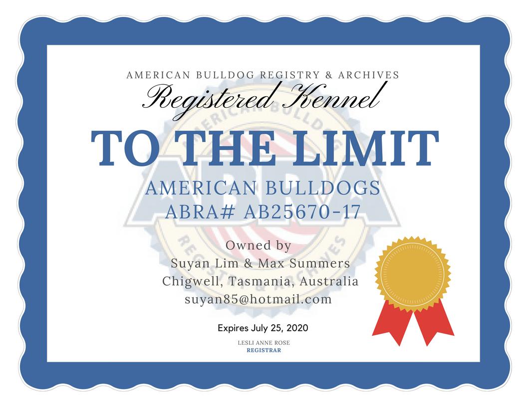 Abra Kennel Of The Day To The Limit American Bulldogs Australia Abra Ab25670 17 Suyan Li American Bulldog American Bulldog Puppies Johnson American Bulldog