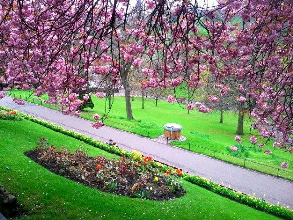 Cherry Blossom In Princes St Gardens Edinburgh Flower Garden Garden Trees Cherry Blossom