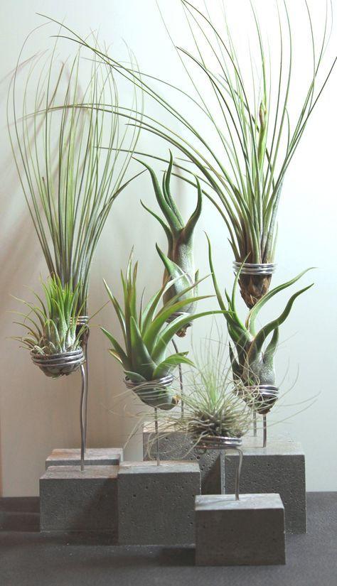 betonhalter f r tillandsien deko pinterest pflanzen garten und pflegeleichte pflanzen. Black Bedroom Furniture Sets. Home Design Ideas