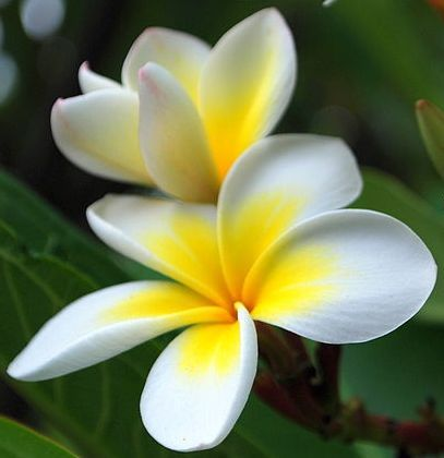 Google Image Result For Http Www Tropical Flower