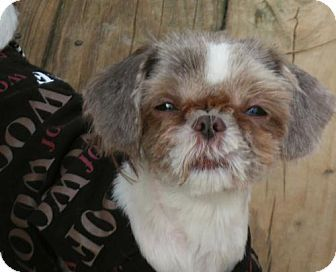Pin By Jm Volineer On Dogs Are Love Dogs Shih Tzu Pets