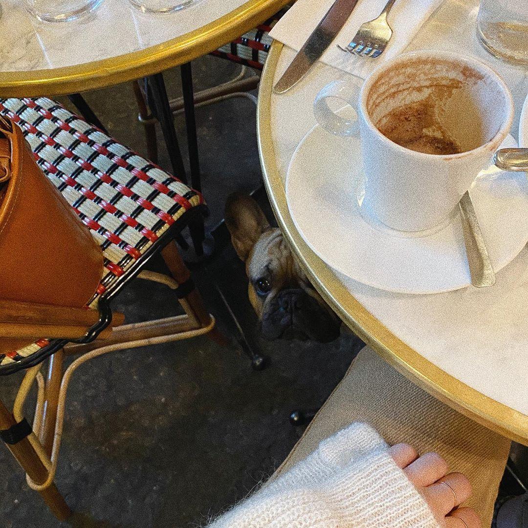 I see you 👀 @itspacothefrenchie  #playingwiththedog #frenchbouledogue #dogsofinstagram #coffee #cafe... #yooying