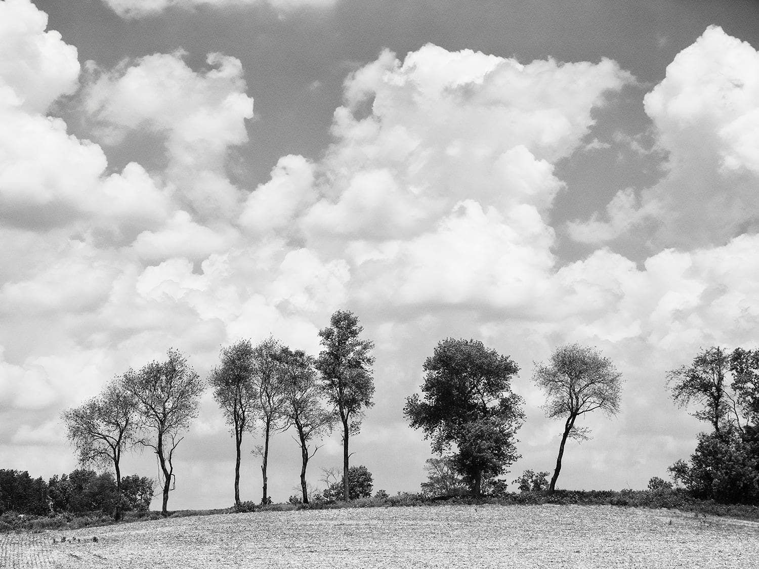 Tree Line Under A Cloudy Sky Black And White Photograph P5291637a Landscape Photography Nature Landscape Photography Landscape Photos
