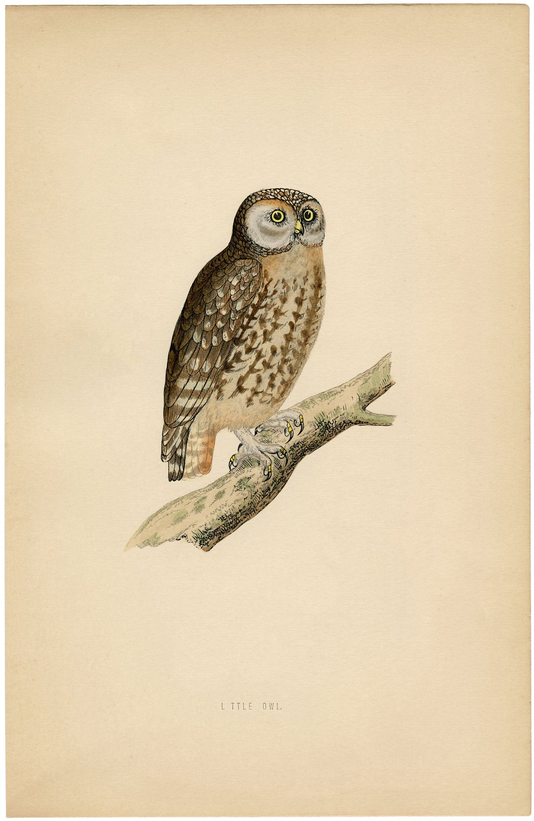 6 Owl Printables Owl Printables Vintage Owl Owl Illustration