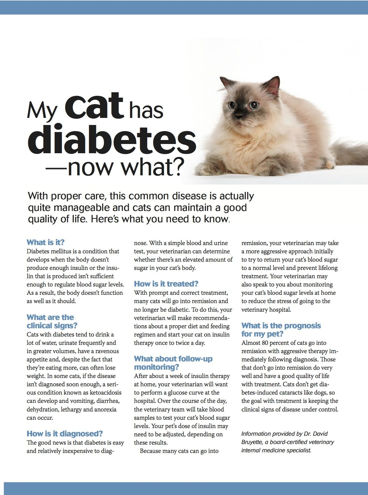 My Cat Has Diabetes Now What Cat Health Pet Care Printables Pet Health