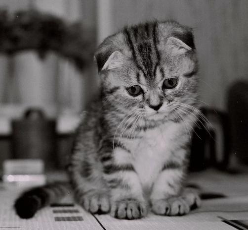 أروع صور القطط صور قطط روعة2020 صور قطط حلوة صور قطط حزينه وجديدة Animals Cats