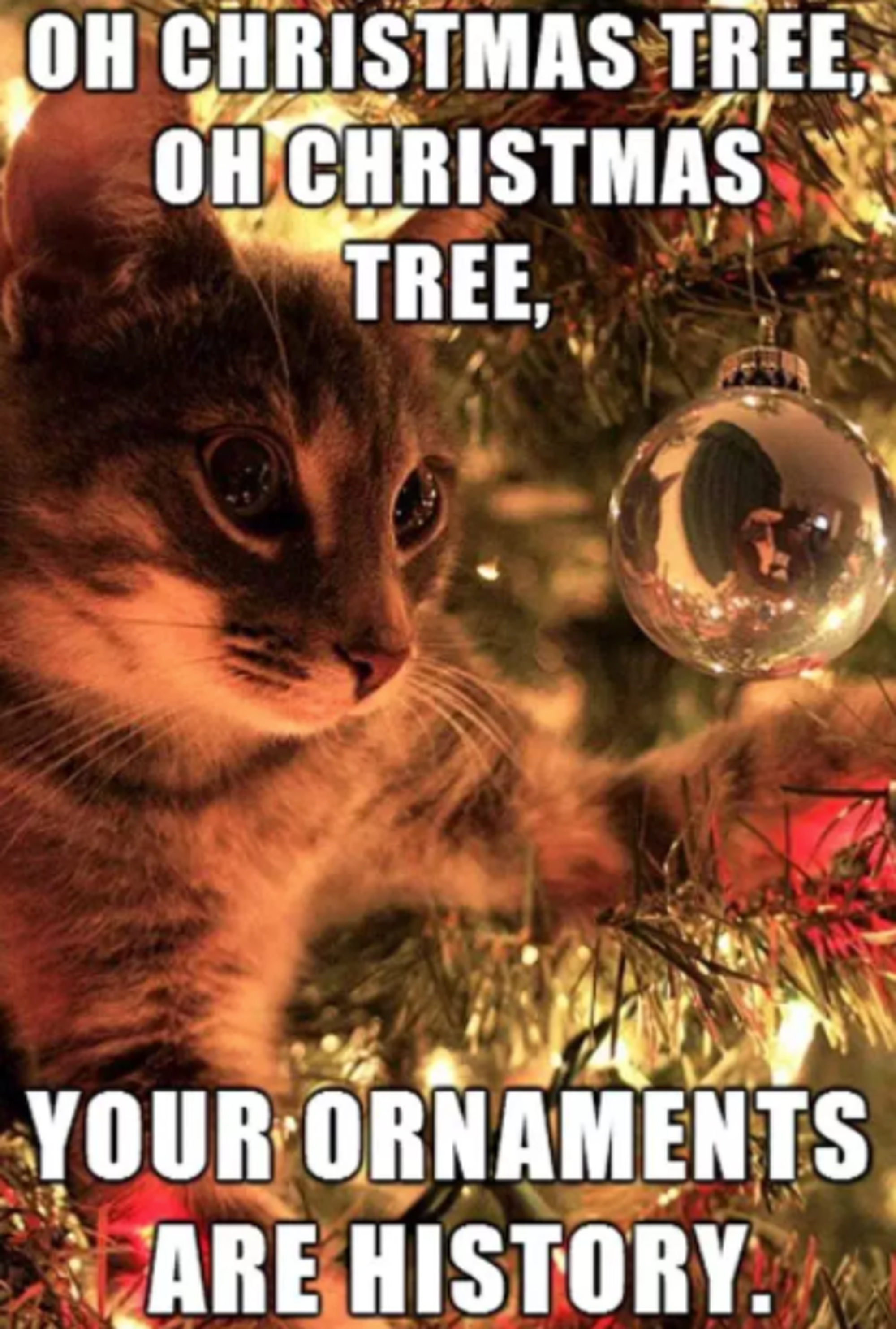 20 Funny Christmas 2017 Memes To Get You Into The Holly Jolly Holiday Spirit Christmas Memes Funny Funny Christmas Pictures Christmas Cat Memes
