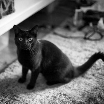 Black Male Cat Lost In Se1 London Young Black Male Cat Lost In Se1