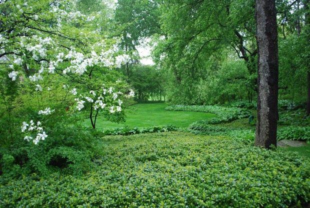 paisaje en junio   Paisaje tropical, Diseño de paisaje, Paisajismo ...