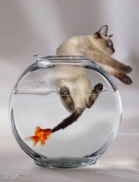 cat bowl @valeriemousseau