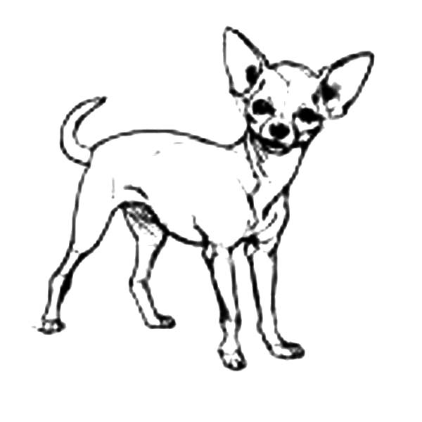 Chihuahua Dog Cute Pet Coloring Pages Netart Dog Coloring Page Puppy Coloring Pages Animal Coloring Pages