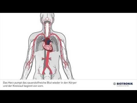 Wie funktioniert das Herz-Kreislauf-System? #medizin #wissen ...