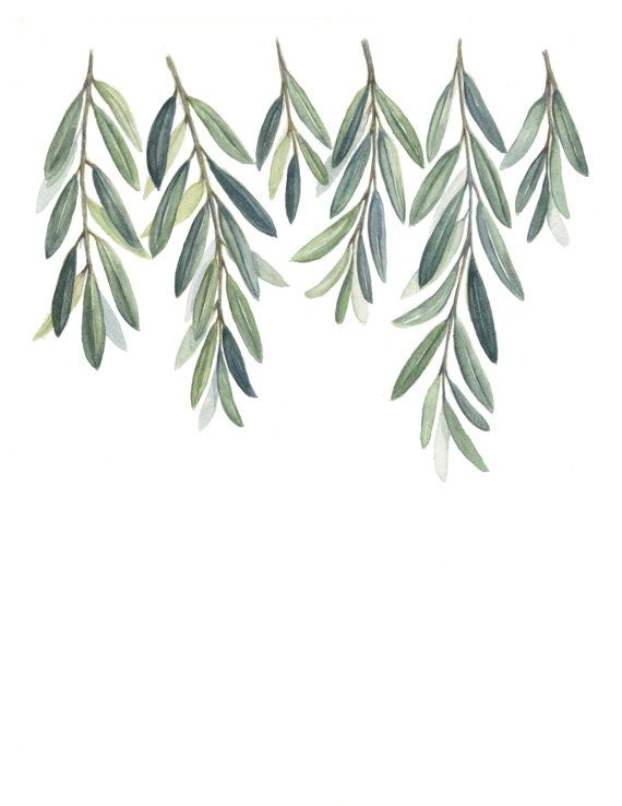 Olive branches art print olive branch leaves painting for Watercolor greenery