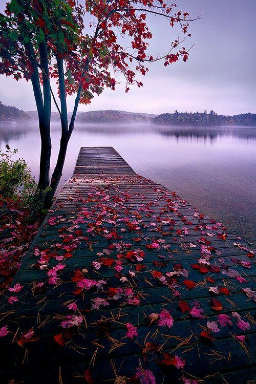 Gorgeous Fall Foliage Nature Nature Photography Beautiful Landscapes