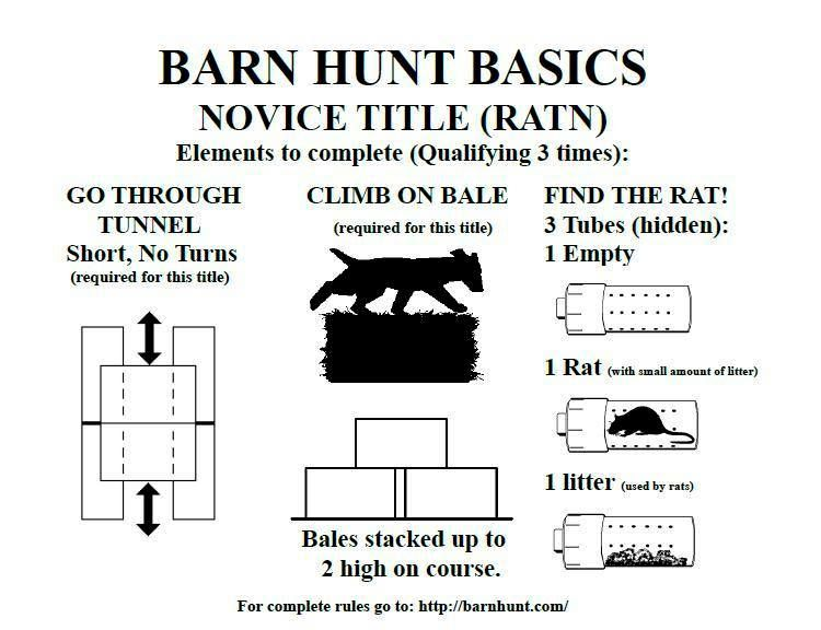 Pin By Down The Leash On Barn Hunt Other Ratty Things Barn Hunt Dog Exercise