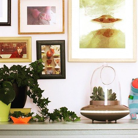 Home kactun happy plants, happy homes Color Pinterest