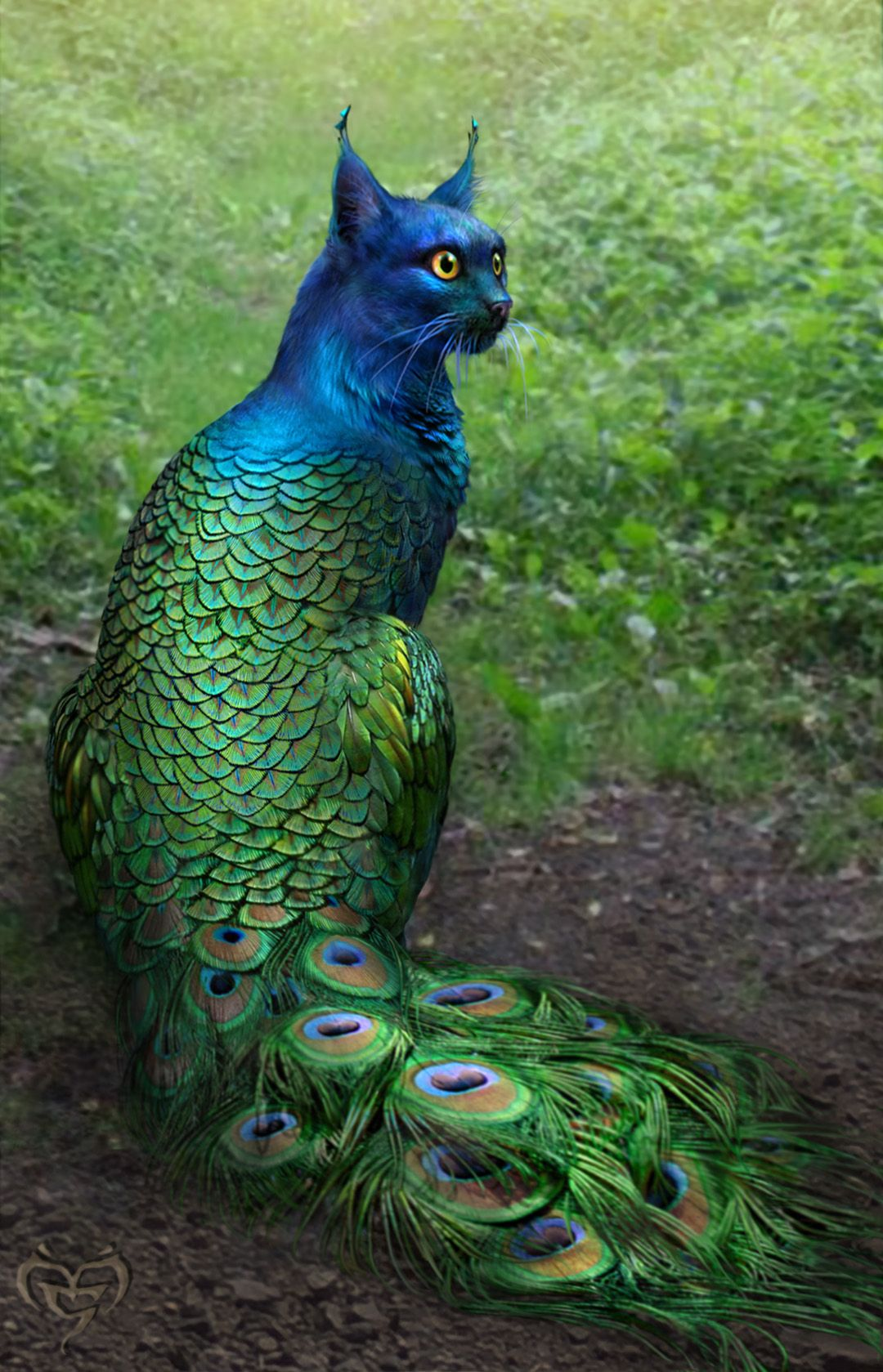 YASSSSS!!! Hybrid peacock cat! or peacock fish, for Milla