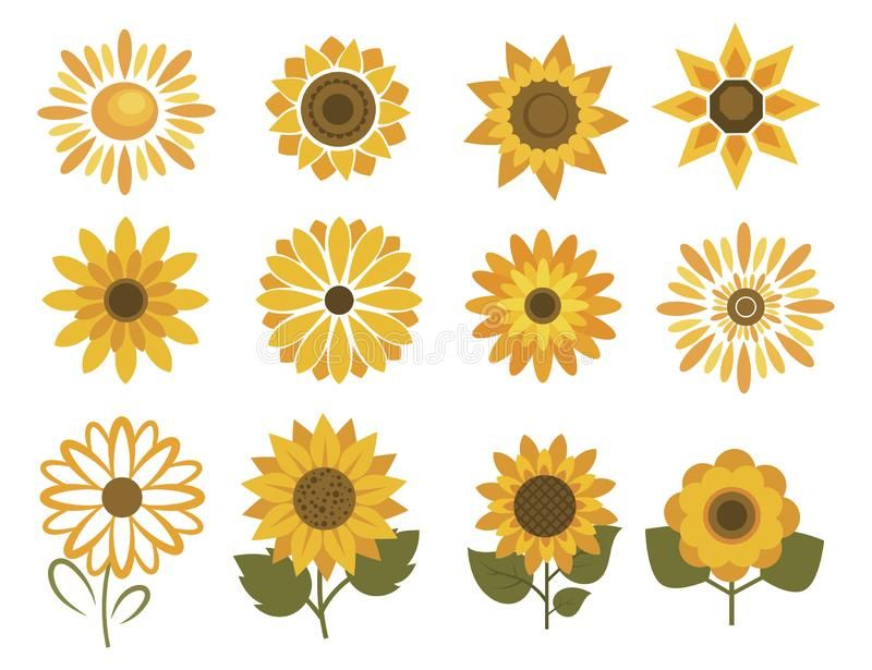 Set Of Sunflower Flowers Collection