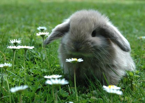 adorable i 39 d like a bunny again someday soooooo cute pinterest kaninchen hase und. Black Bedroom Furniture Sets. Home Design Ideas