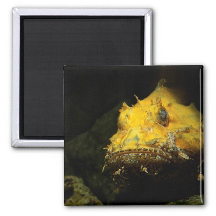 A yellow Red scorpionfish (Scorpaena scrofa) - Square Magnet