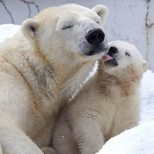 Huge Victory for the Arctic -- Two Oil, Gas Lease Sales Cancelled -- Center for…