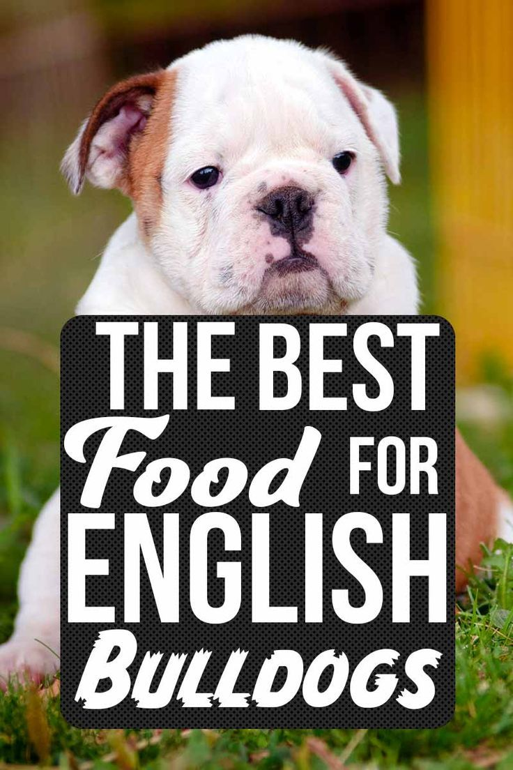 Finding The Best Food For English Bulldog Puppies