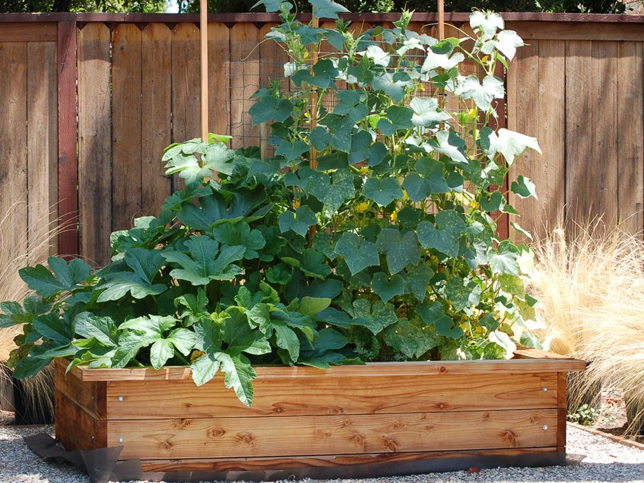 Hochbeet bauen aus Holz terrasse Pinterest Hochbeet bauen - terrassen bau tipps tricks