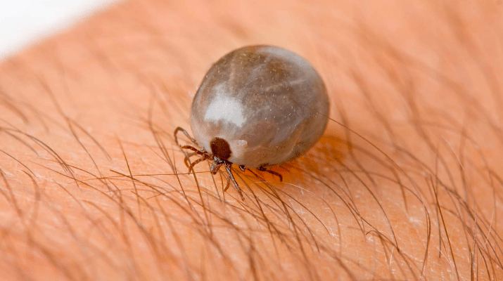 Listerine Is More Than A Mouthwash Here Are 50 Brilliant Uses Everyone Should Be Aware Of Listerine Ticks Tick Removal
