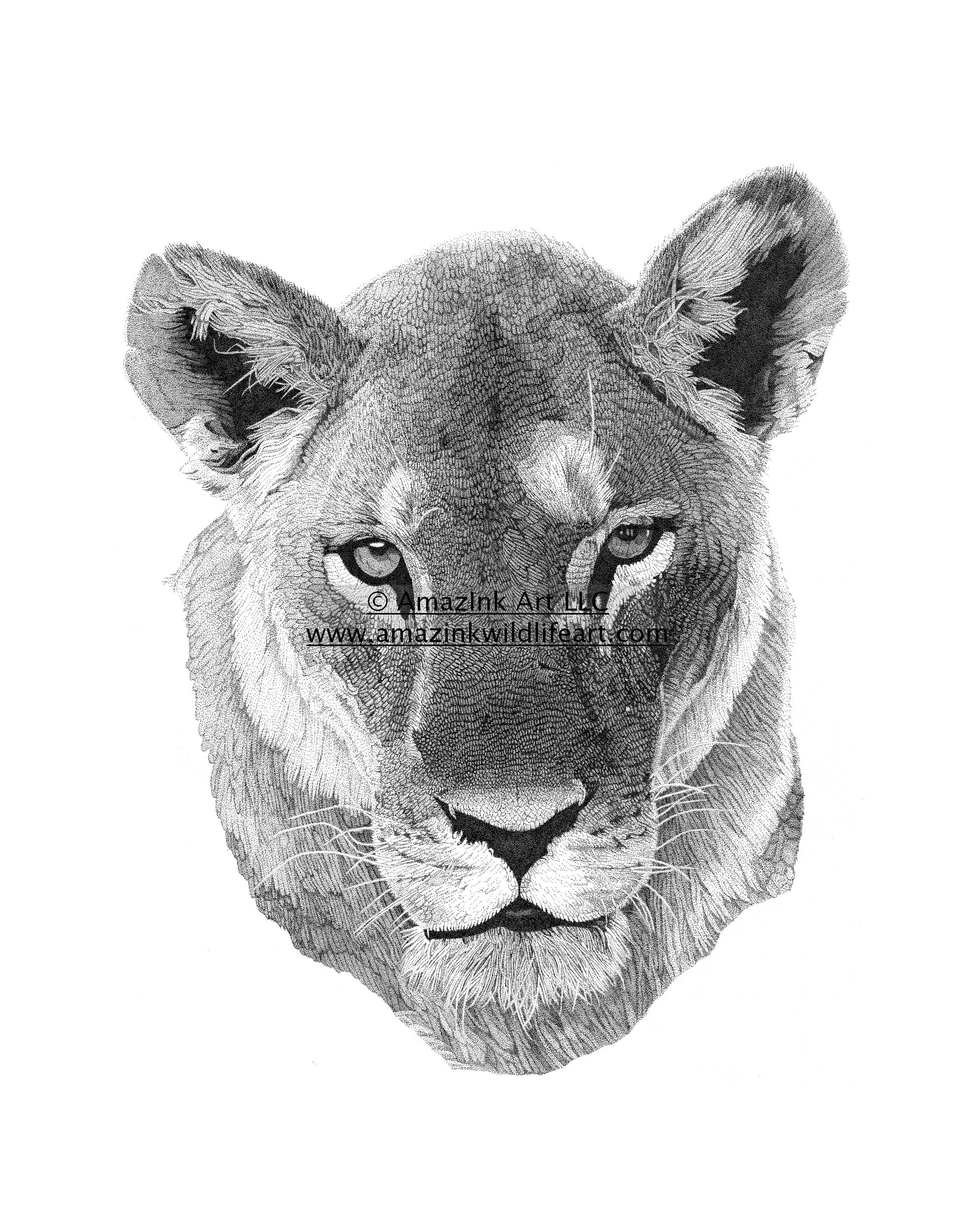 lioness face drawing -...