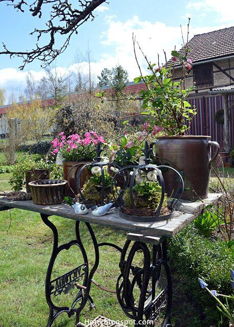 rosa Frühling im Garten