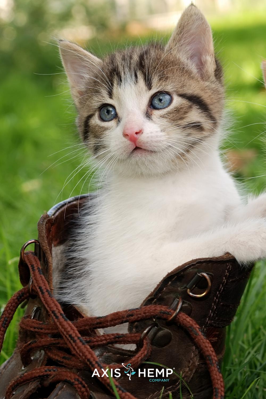 Cbd Cat Treats Non Gmo Organic Axis Hemp Company In 2020 Kittens And Puppies Kitten Breeds Kittens
