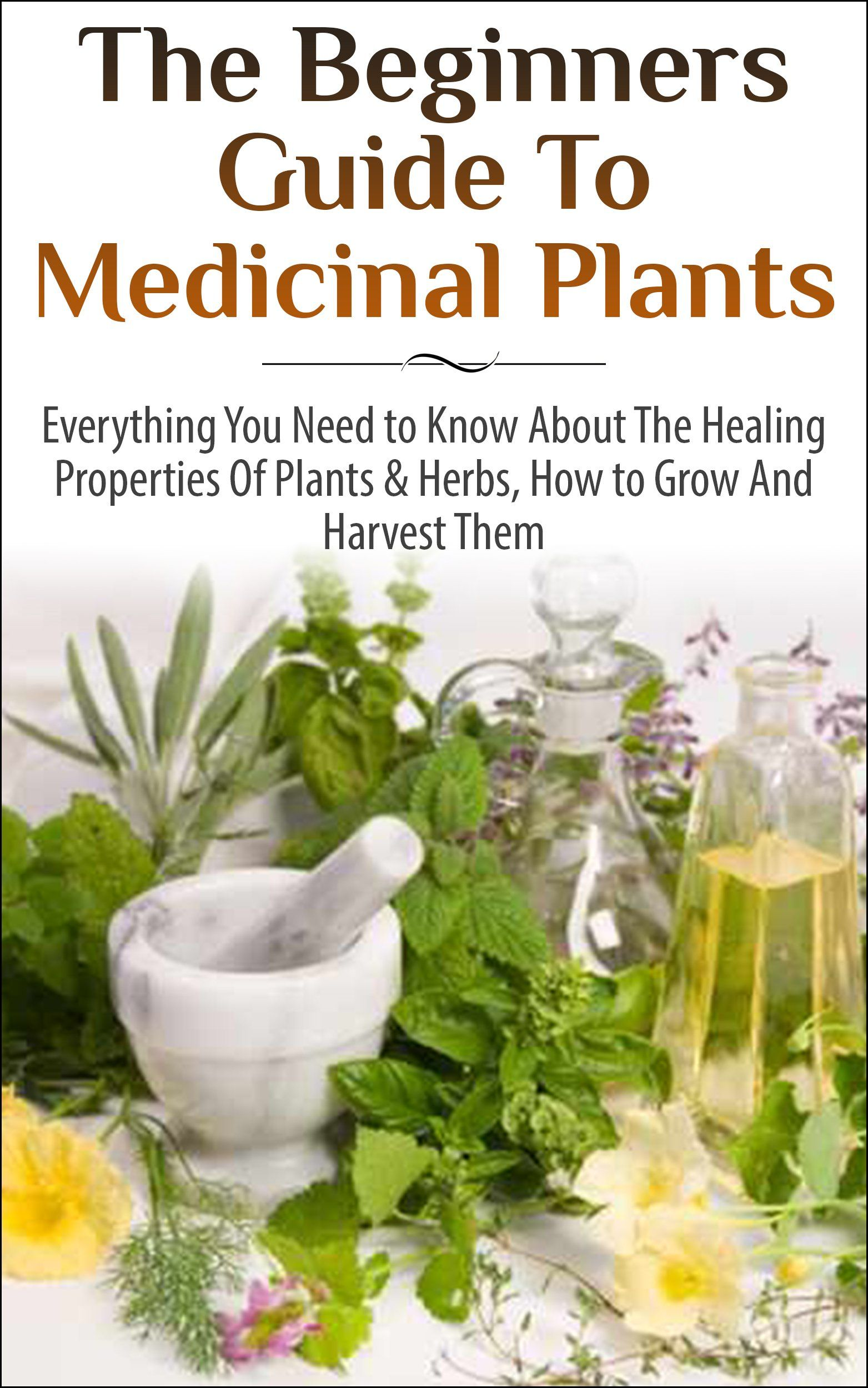 The Beginners Guide To Medicinal Plants Everything You