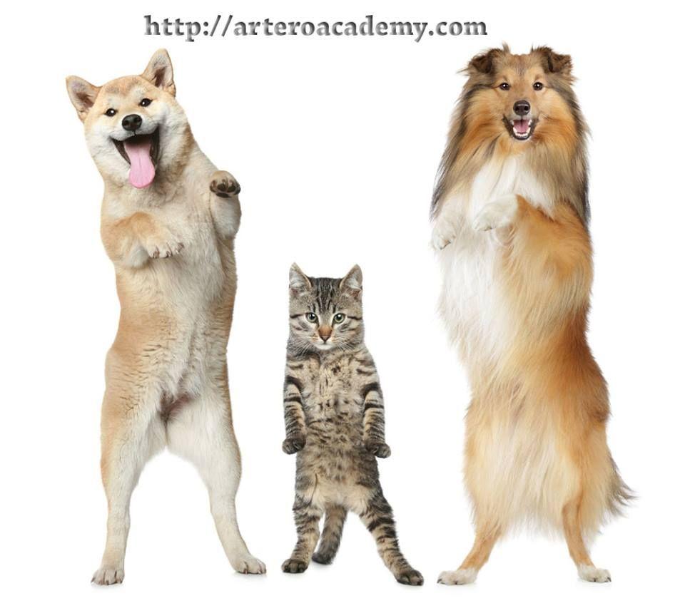 ¡¡Buenos días!! ¡¡arriba esos cuerpos ya estamos a mitad de semana!! Fórmate en peluquería canina con Artero International Academy 93 515 00 35