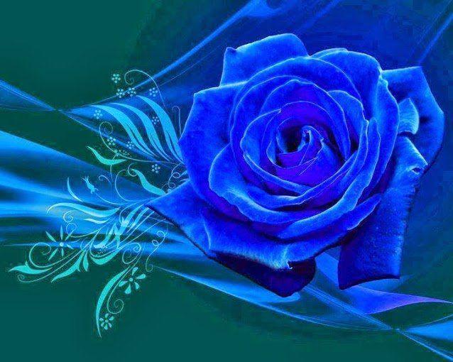 blumen pinterest rose blaue rosen und blumen. Black Bedroom Furniture Sets. Home Design Ideas
