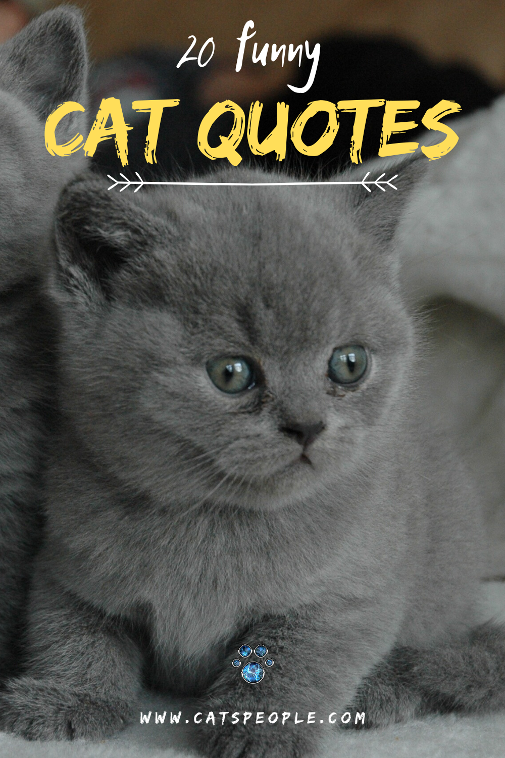 20 Funny Cat Quotes Cat quotes, Funny cats, Cat dad