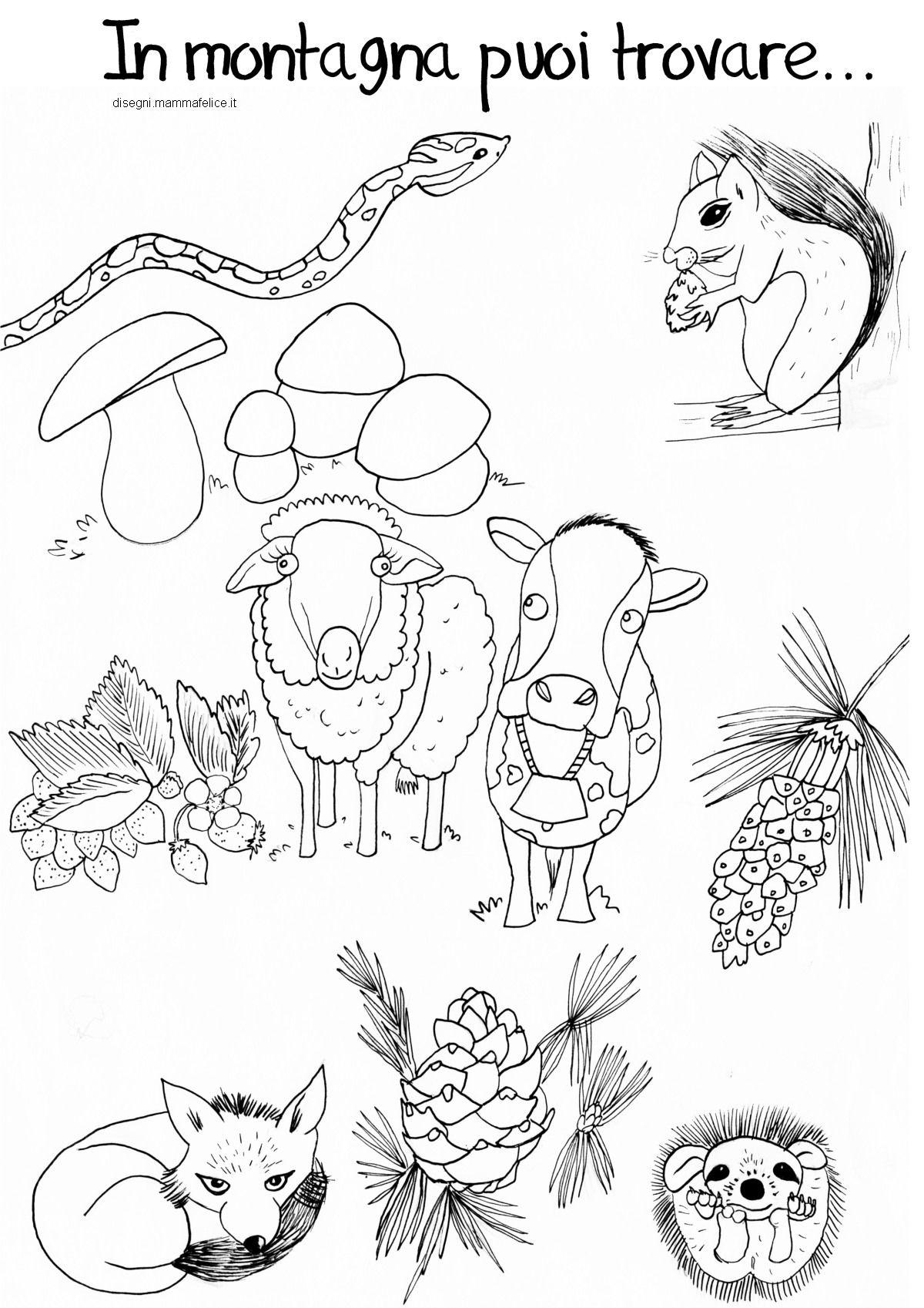 Disegno Da Colorare Animali Della Montagna Disegni Da Colorare Animali Disegni