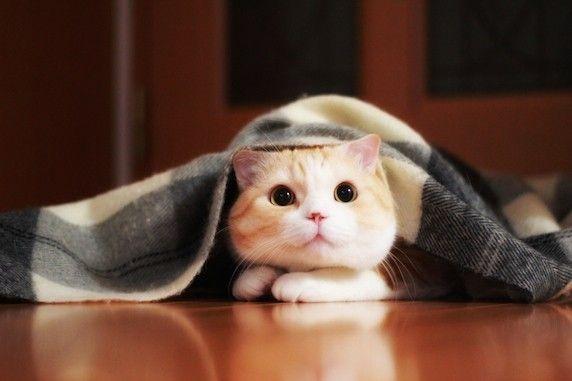 このコたちがいてくれたから ただただ毎日 ありがとう マロンくん 龍馬くん Vol 44 Petlives 愛犬 愛猫と心地よく暮らすwebマガジン 猫 癒し クールな猫 キュートな猫