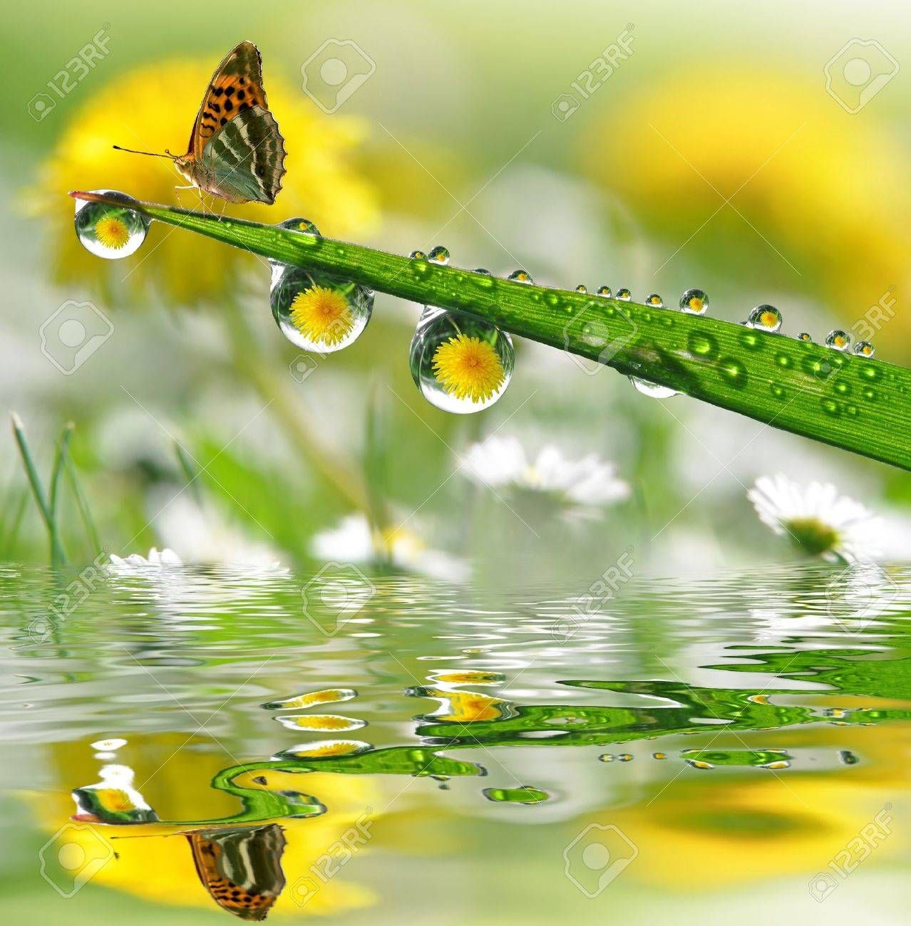 Water Drops On Green Grass With Butterfly Rumput Hias Rumput